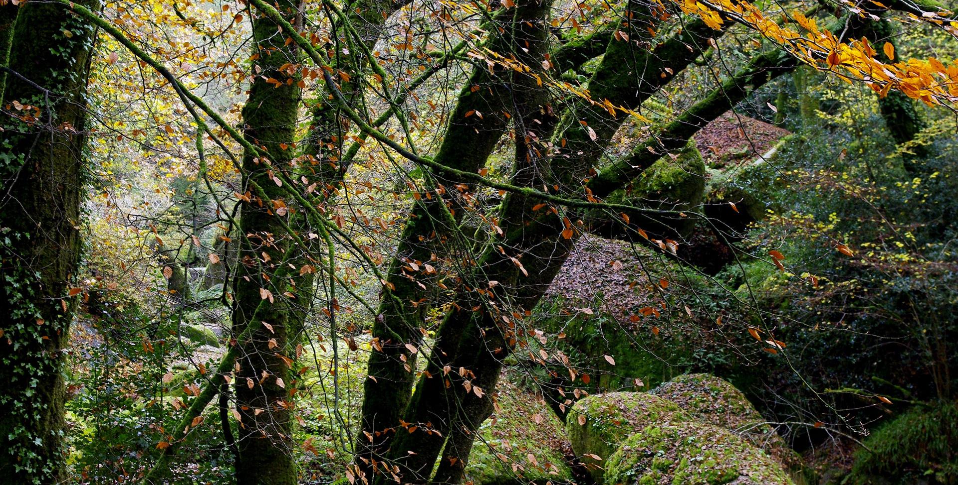Monts d'Arrée -Forêt Bretagne